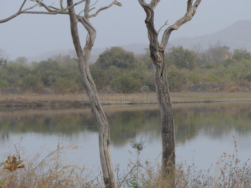 Деревья стоковые фото