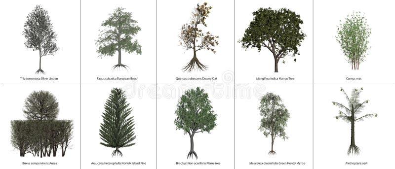 Деревья иллюстрация штока