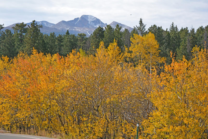 Деревья Aspen в горах Колорадо осенью Сосны рядом стоковая фотография