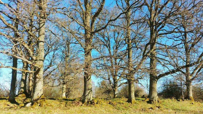 Деревья Dencing стоковые изображения