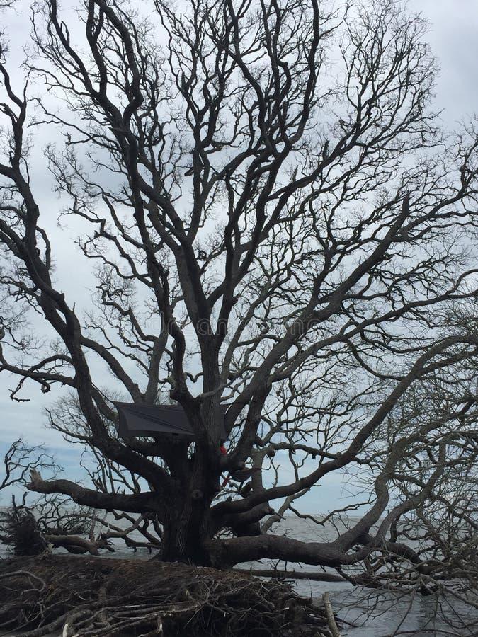 Деревья Driftwood стоковое фото rf
