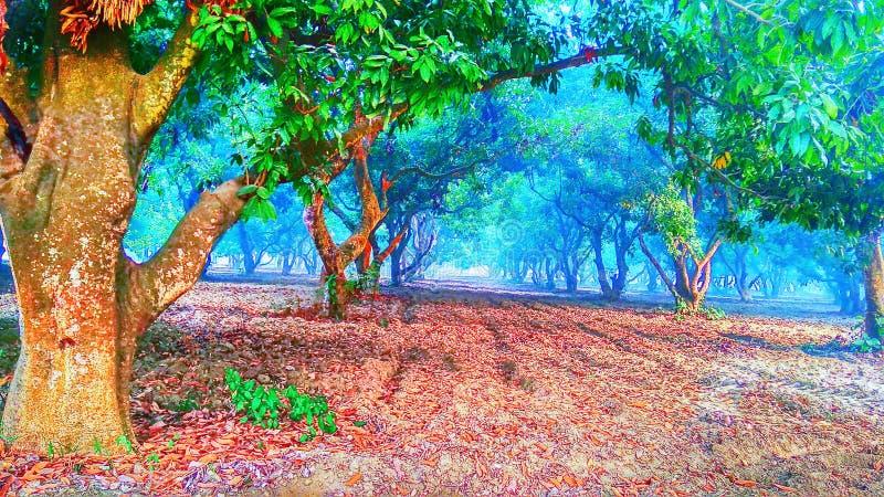 Деревья litchi стоковое фото rf