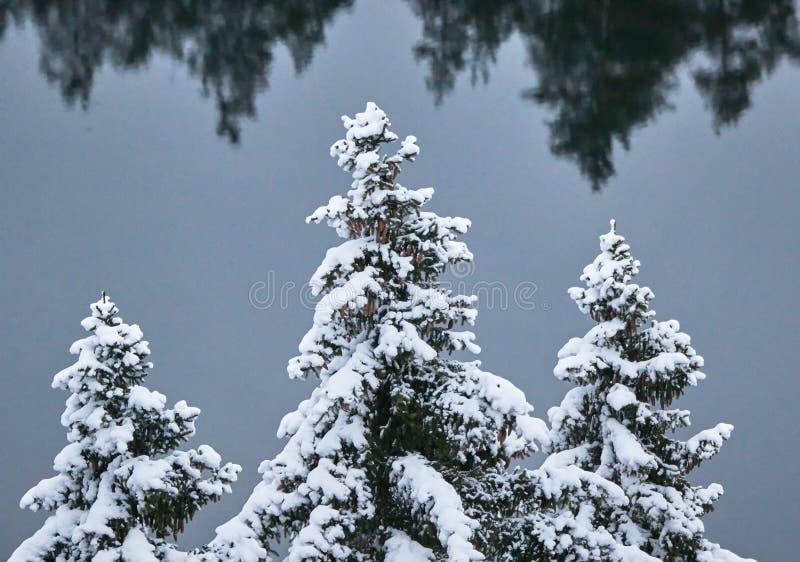 Деревья Snowy с озером и отражения на предпосылке стоковое изображение