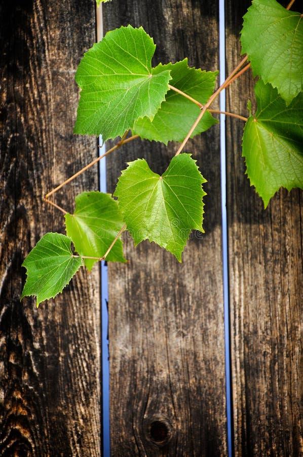 Деревянная веранда с листьями виноградины стоковые фото