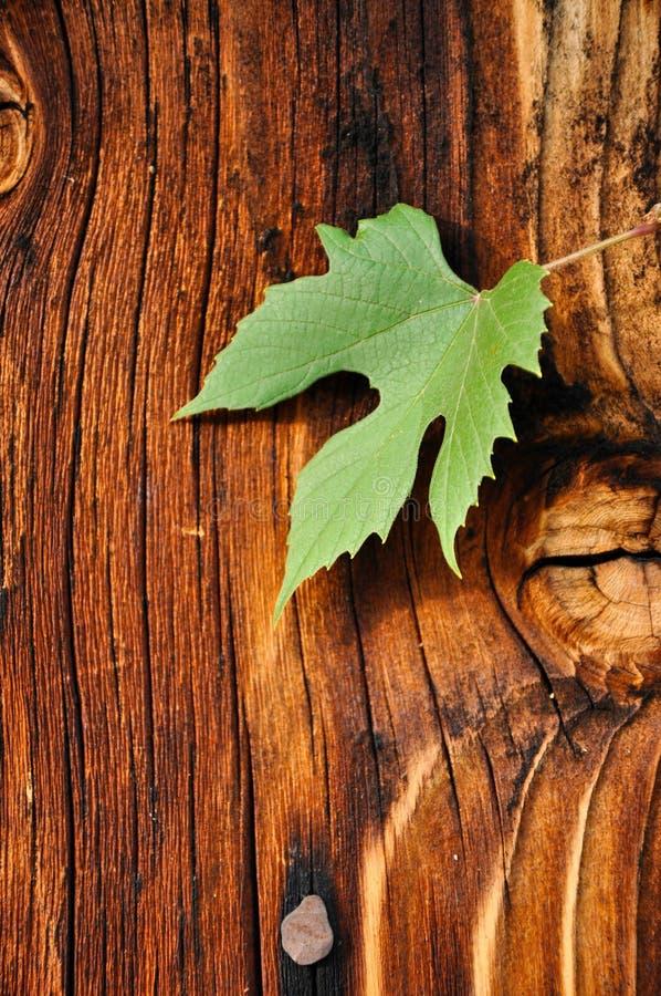 Деревянная веранда с листьями виноградины стоковое фото