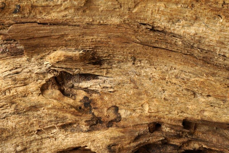Деревянная детализированная поверхность, текстурированная и стоковая фотография rf