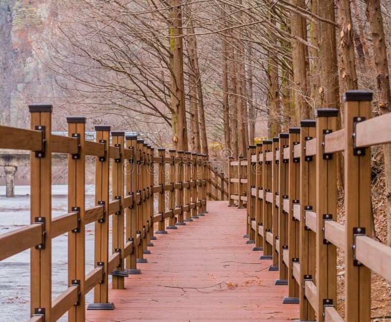 Деревянная дорожка наряду с замороженным рекой стоковая фотография