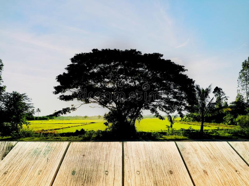 Деревянная доска на дереве силуэта большом и рис field стоковое фото rf