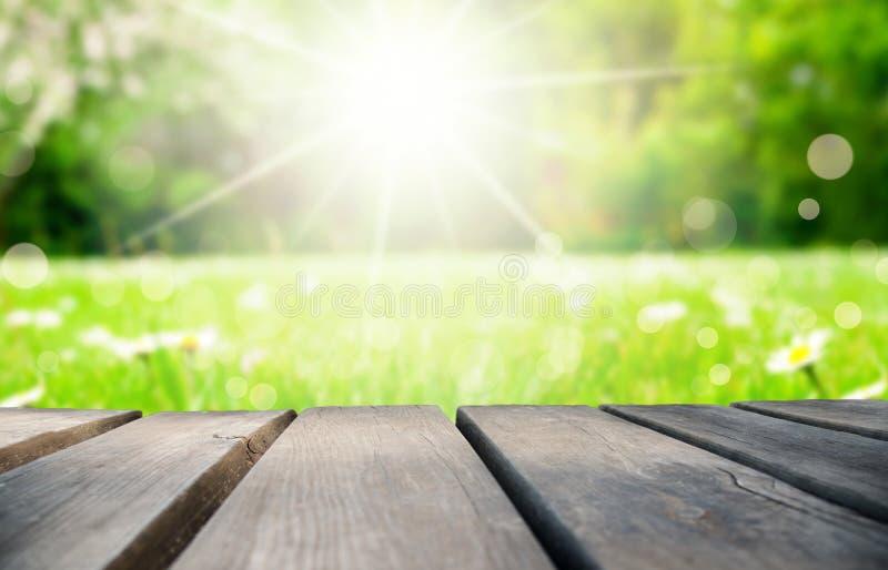 Деревянная доска, поле цветка маргаритки как предпосылка, Bokeh стоковое изображение rf