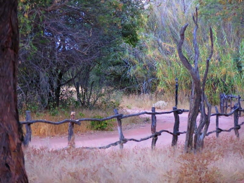 Деревянная загородка с красной грязной улицей песка и сухой травой на заповеднике Okonjima, Намибии стоковые фото