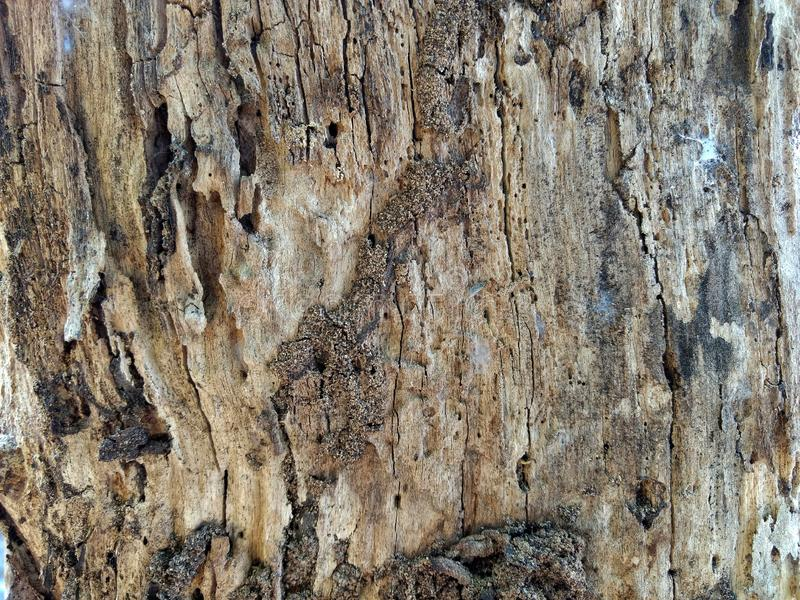 Деревянная кора концептуальные основы стоковое фото rf