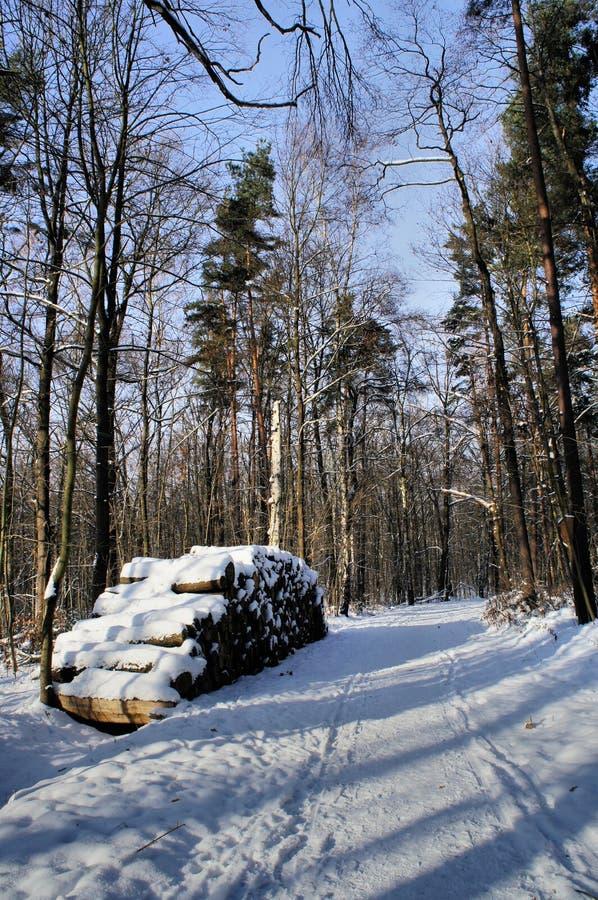 Деревянная куча в лесе зимы стоковые фото
