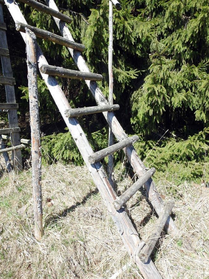 Деревянная лестница в природе около места охотника, Литвы стоковое изображение