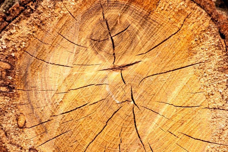 Деревянная обработанная резанием поверхность дуба Детальные теплые темного тоны коричневого цвета и апельсина валить ствола дерев стоковое изображение rf
