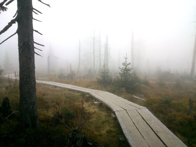 Деревянная дорога леса в тумане стоковые фотографии rf