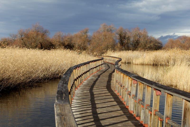 Деревянная дорога озера стоковое фото rf