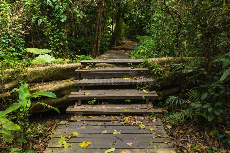 Деревянная дорожка в лесе стоковые изображения rf