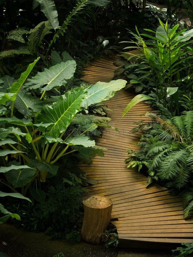 Деревянная дорожка в саде стоковое фото