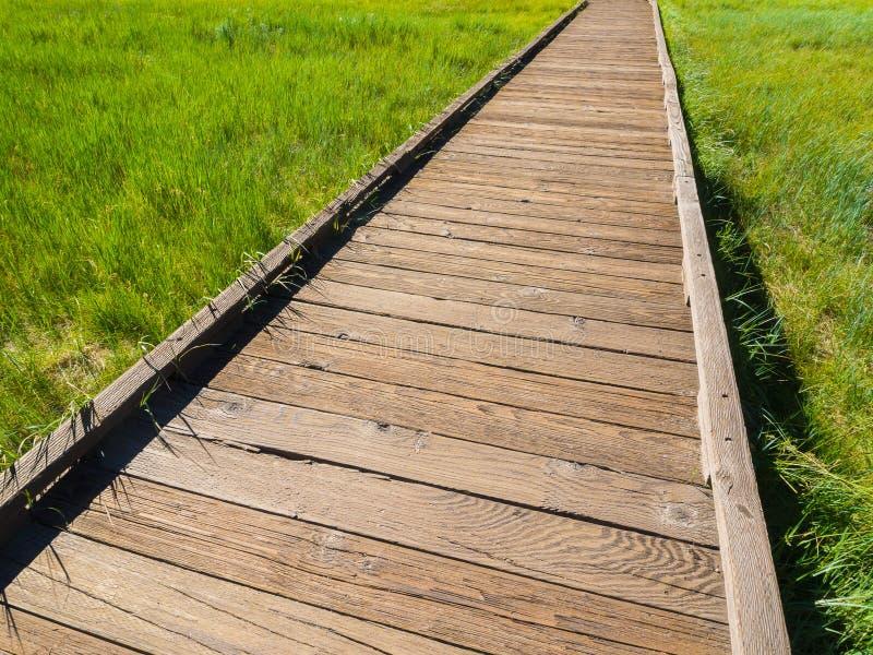 Деревянная дорожка среди предпосылки поля зеленой травы стоковое изображение rf