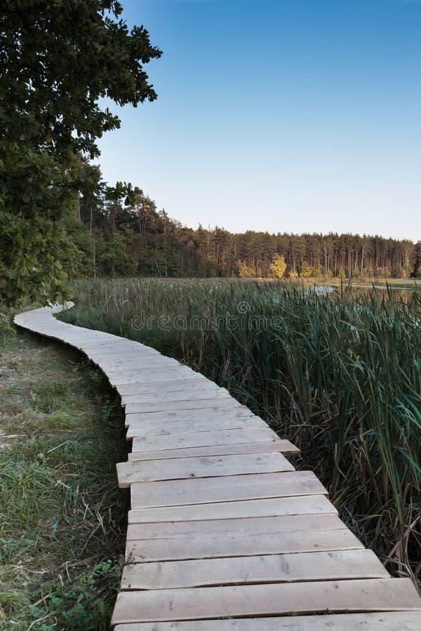 Деревянная платформа бежит вдоль тростников на банке озера стоковые фото