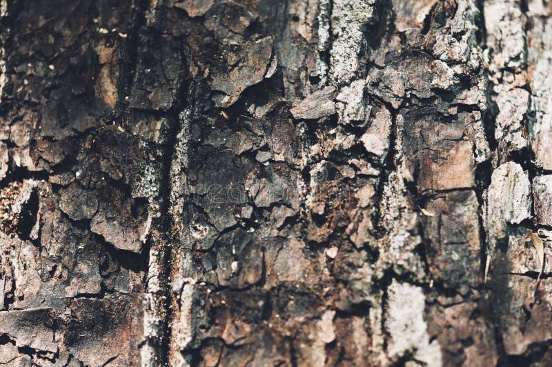 Деревянная предпосылка, текстура пользы старой винтажной расшивы деревянной как естественная предпосылка стоковое фото