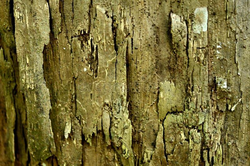 Деревянная предпосылка, текстура пользы старой винтажной расшивы деревянной как естественная предпосылка стоковое фото rf