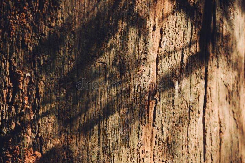 Деревянная предпосылка, текстура пользы старой винтажной расшивы деревянной как естественная предпосылка стоковая фотография rf