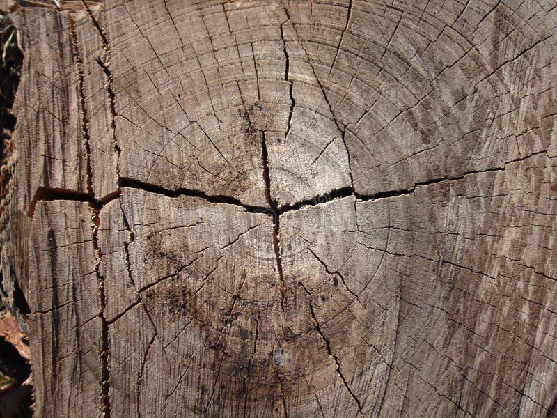 Деревянная предпосылка текстуры, деревянный конец расшивы вверх стоковая фотография