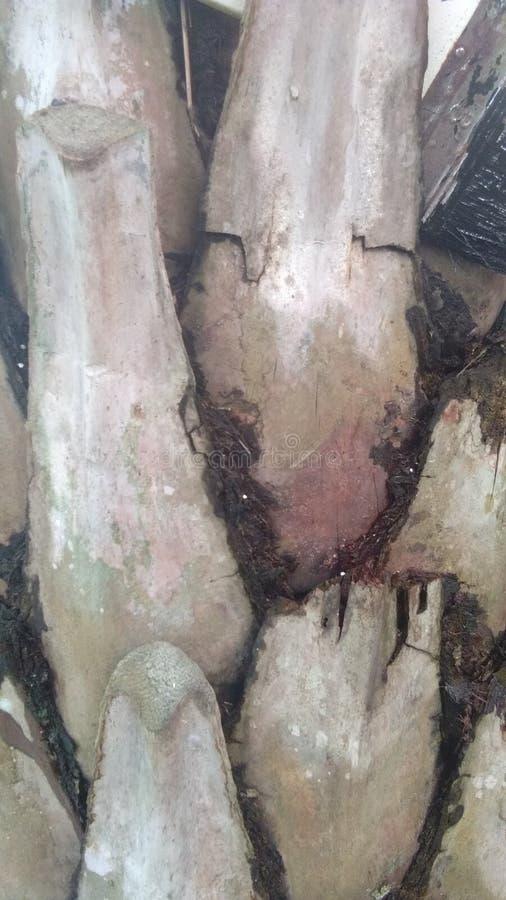 Деревянная деревянная предпосылка фона картины стоковые фото