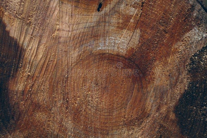 Деревянная предпосылка хоботов Поперечное сечение ствола дерева Деревянные текстура и предпосылка для дизайнеров стоковые фото