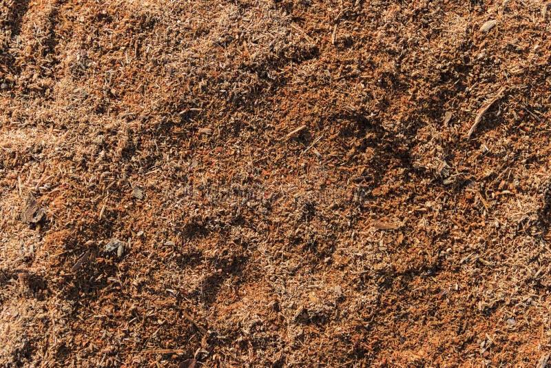 Деревянная предпосылка опилк стоковое фото