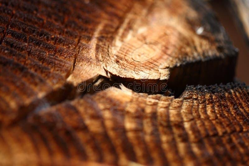 Деревянная предпосылка с треснутыми годичными кольцами стоковые изображения