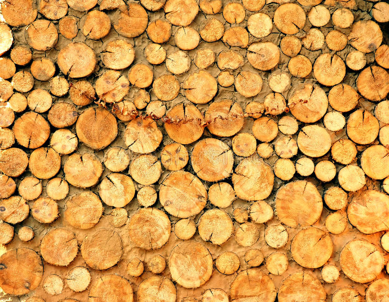Деревянная предпосылка текстуры имеет много журналов которые режут от больших деревьев и малый стоковые изображения rf