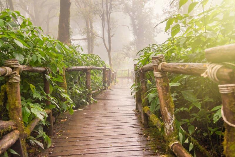 Деревянная прогулка природы дорожки на туманном утре Волшебный туманный лес стоковое изображение