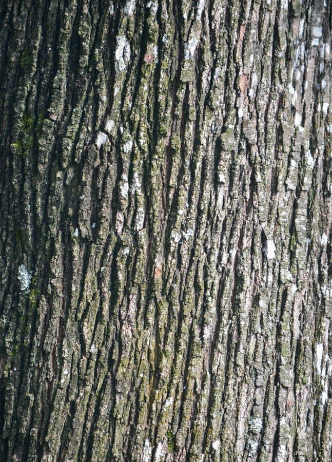 Деревянная расшива стоковое фото rf