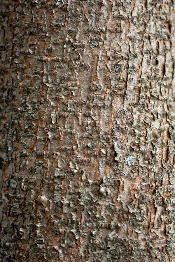 Деревянная расшива стоковая фотография