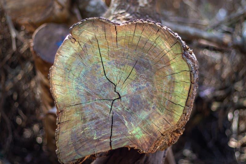 Деревянная режа изумительная красочная картина стоковое фото rf