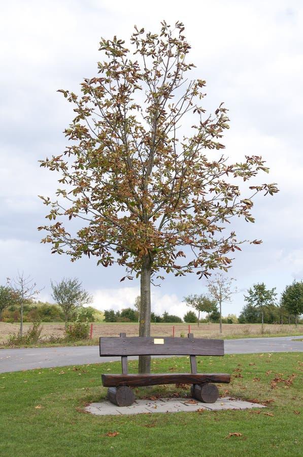 Деревянная скамья на поле для гольфа в осени, Германии стоковое фото rf