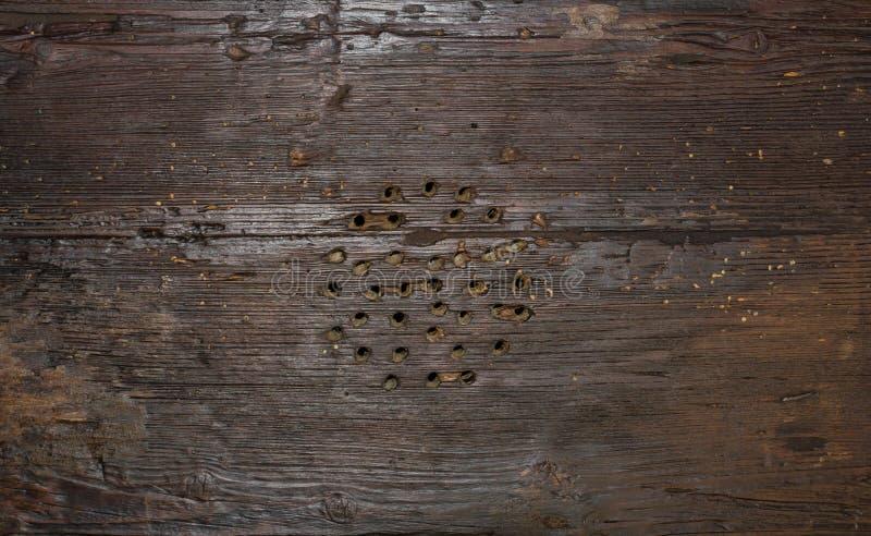 Деревянная текстура доски стоковое изображение rf