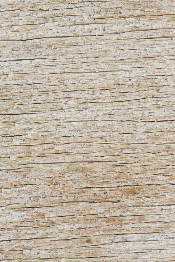 Деревянная текстура доски стоковые изображения