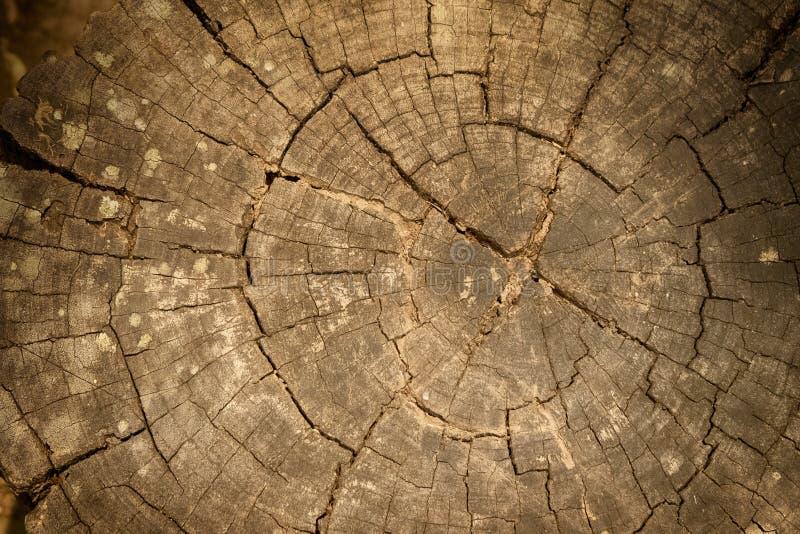 Деревянная текстура отрезанного ствола дерева стоковое изображение