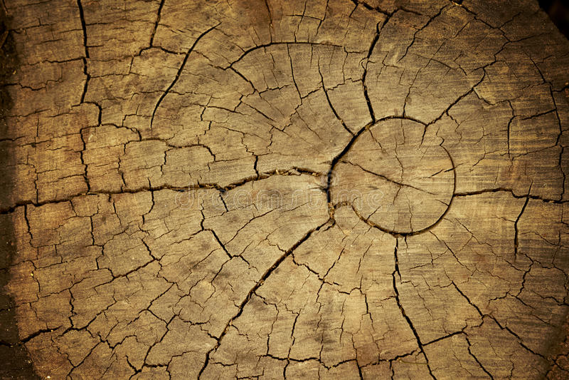 Деревянная текстура отрезанного ствола дерева стоковое фото