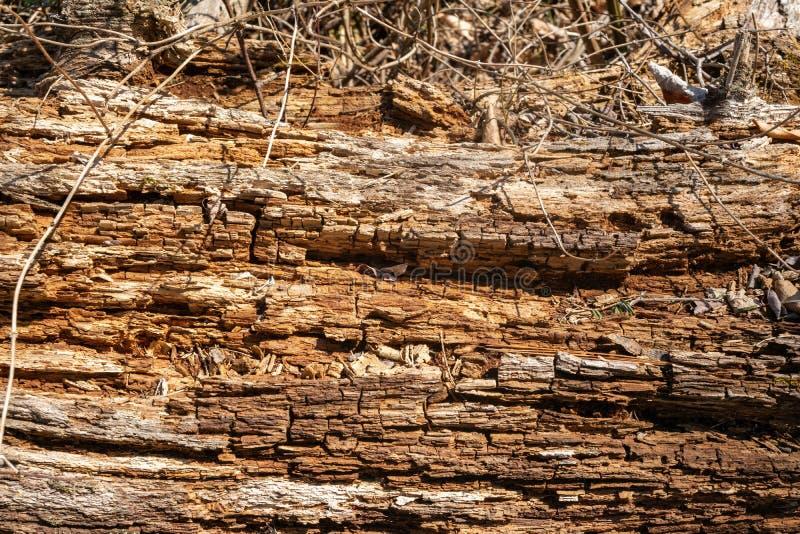 Деревянная текстура, от старого тухлого дерева стоковые фотографии rf