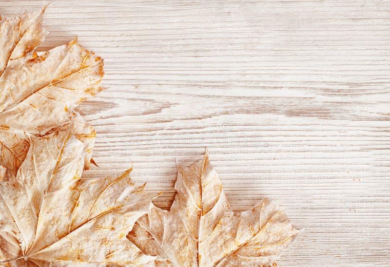 Деревянная текстура предпосылки и листья, белая деревянная планка, осень стоковая фотография