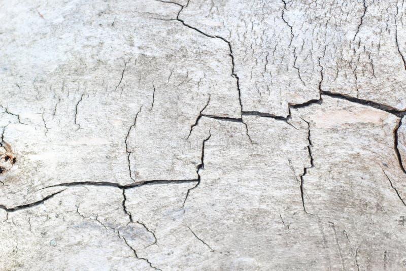 Деревянная текстура с отказами, отрезанная древесина стоковая фотография rf