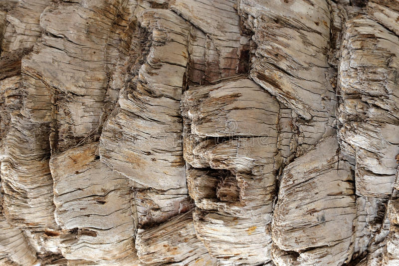 Деревянная текстура. стоковое фото
