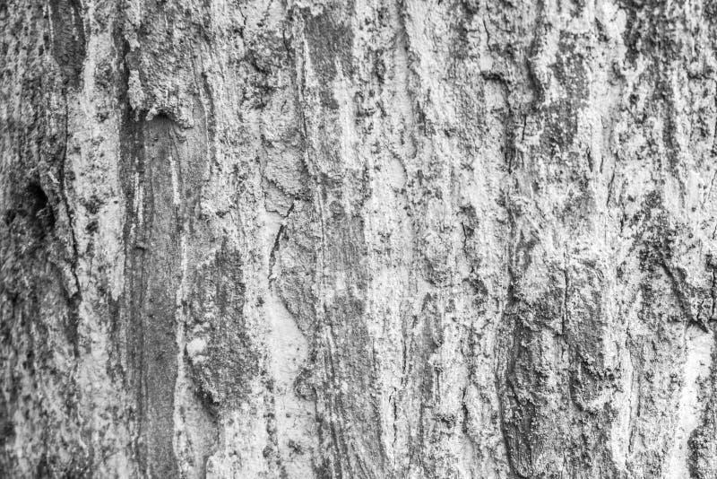 Деревянная текстура jati с черно-белым цветом принятым в центральную Ява стоковая фотография rf