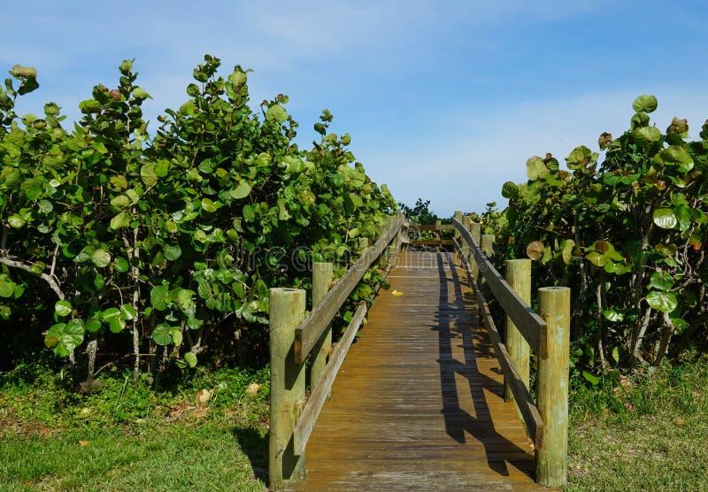 Деревянная тропа к пляжу стоковое изображение rf