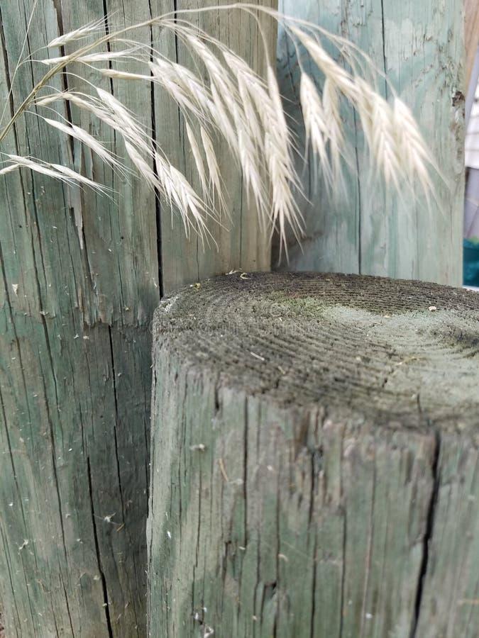 Деревянная штабелевка стоковые фотографии rf