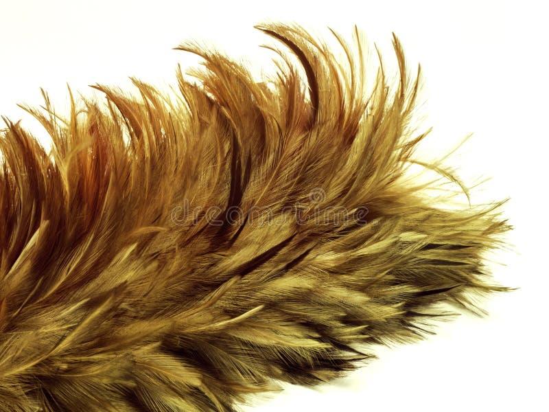 Деревянная щетка пера стоковая фотография rf